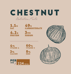 Chestnut health benefits vector