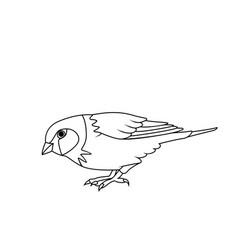 Coloring book sparrow vector