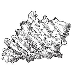 hand drawing seashell-7 vector image