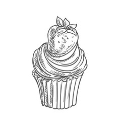 strawberry muffin isolated cupcake dessert sketch vector image
