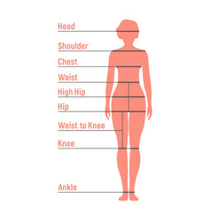 Woman size chart human front side silhouette vector