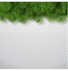 christmas tree branches background christmas and vector image