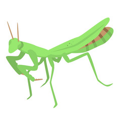 Green mantis icon isometric style vector