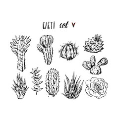 hand drawn ink graphic creative succulent vector image