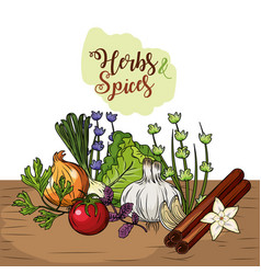 herbs and spices plants and organ food vector image