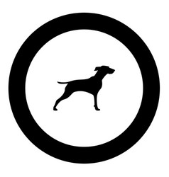 Hunter dog or gundog icon black color simple image vector