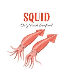 Squid in cartoon style vector image