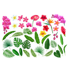 tropical leaves and flowers vector image
