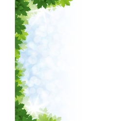 Green maple leaves against the blue sky vector image