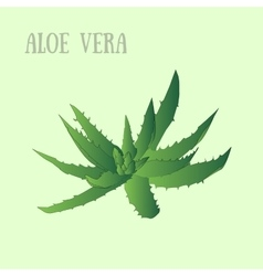 aloe vera in pot vector image