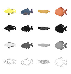 different types of aquarium and sea fish the moon vector image