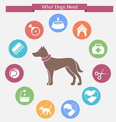 Dog infographics and icon set vector image