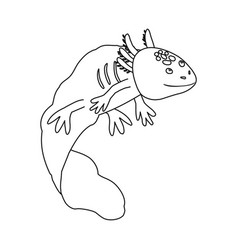 Isolated object lizard and axolotl symbol vector