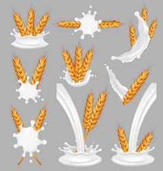 Rice milk splash set realistic vector