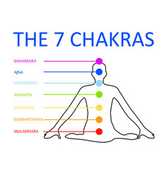 The seven chakras with their respective colors vector