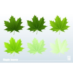 Green maple leaf Set vector image vector image