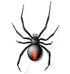Black Widow spider vector image
