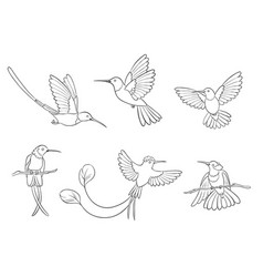 different hummingbirds in outlines vector image