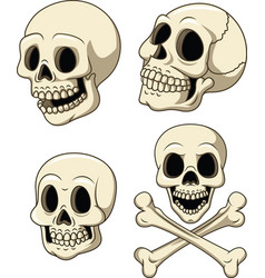 Human skull collection set isolated on white backg vector