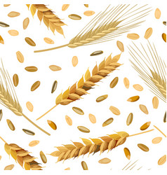 Pattern wheat and rye ears and grains vector