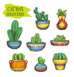 set isolated cactus in pot cactaceae in plate vector image