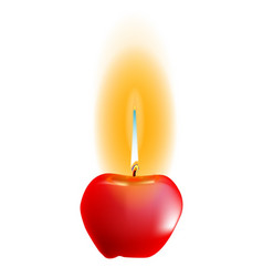 apple wick vector image