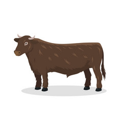 bull farm animal male standing vector image