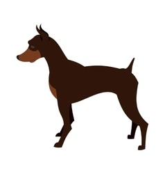 Doberman pincher dog vector