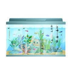 fish swimming among stones and seaweed in aquarium vector image