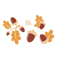 Isolated oak and acorns on white background vector
