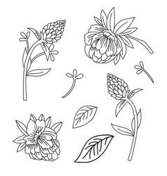 line art set decorative flowers vector image