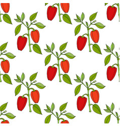 paprika red pepper spice seamless pattern vector image