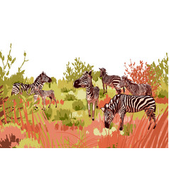 The herd zebras sowing in steppe landscape vector