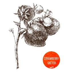 Hand drawn strawberry vector image