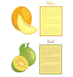 bael exotic juicy fruit melon whole cut vector image