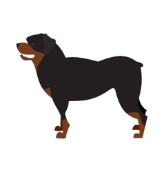 Dog breed rottweiler vector