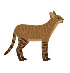 exotic jungle cat vector image