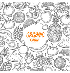 hand draw fruit on white background vector image
