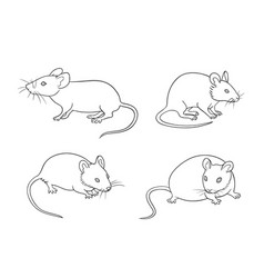 Mice in contours vector