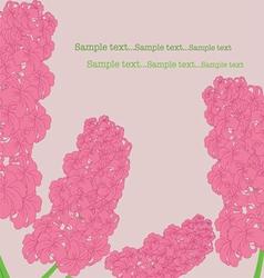 Pink hyacinth vector