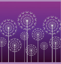 purple background with white dandelion vector image