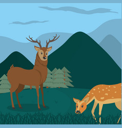 Deers at forest cartoos vector