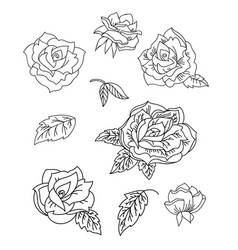 line art set rose flowers vector image