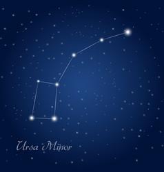ursa minor constellation vector image
