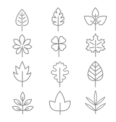 Leaf thin line icons vector image