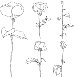 Roses set of detailed hand drawn vector image