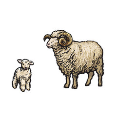 sketch cartoon style sheep and lamb set vector image vector image