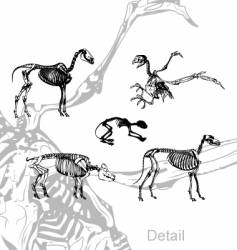 animals skeleton vector image