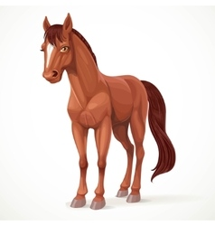 Beautiful brown horse with a star on his forehead vector