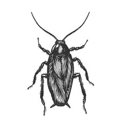 Cockroach bug sketch engraving vector